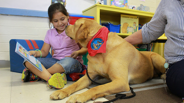 Emotional Support, Service, and Therapy Dogs   Healthy ...