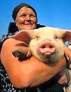 Un maiale in braccio alla sua padrona (foto dal web)