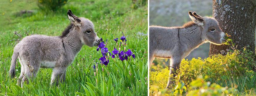 Donkey Flores de cheiro