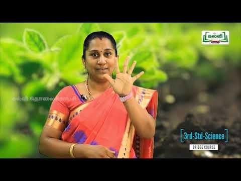 3rd Science தாவரங்களின் பாகங்கள் Kalvi TV