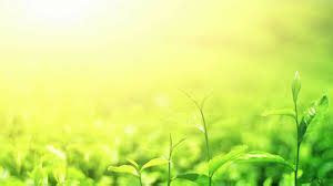 Image result for agriculture background hd   Graphic