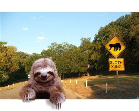 98 best Sloths for Chase images on Pinterest