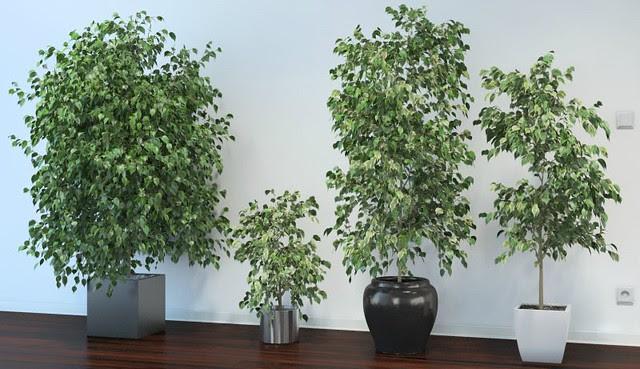1-Plantas-de-interior-resistentes