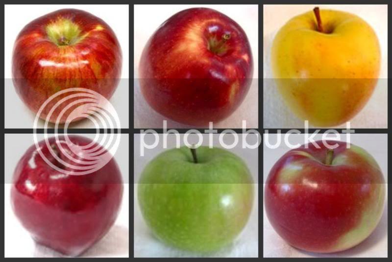 Popular Apples of New England