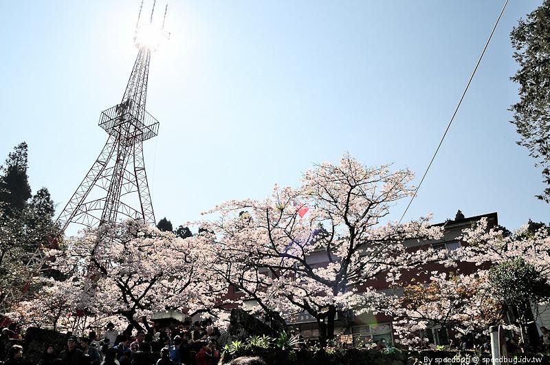 阿里山櫻花季47
