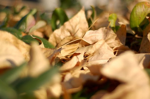 dead leaves, new leaves