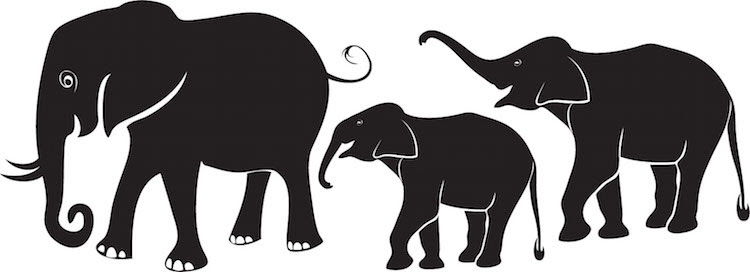 Image result for elephant decals