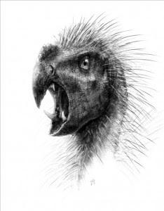 Fotografía facilitada por National Geographic Society del dibujo realizado por Todd Marshall del Pegomastax africanus, un recién descubierto dinosaurio enano con dos afilados colmillos que sin embargo sólo se alimentaba de plantas, según un estudio publicado hoy en la página web ZooKeys de la National Geographic. EFE