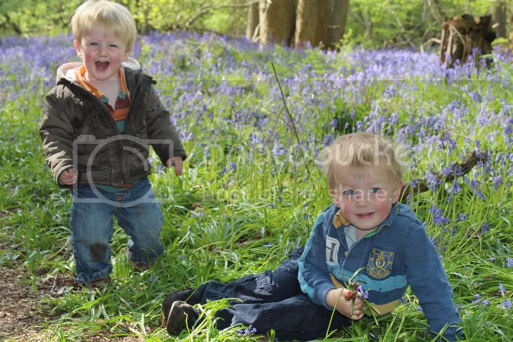 boys in bluebells