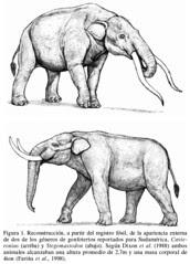 Cuvieronius arriba y Stegomastodon abajo