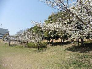 今池親水公園13.JPG