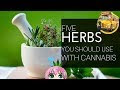 (Free Webinar) Five Herbs You Should Be Using With Cannabis