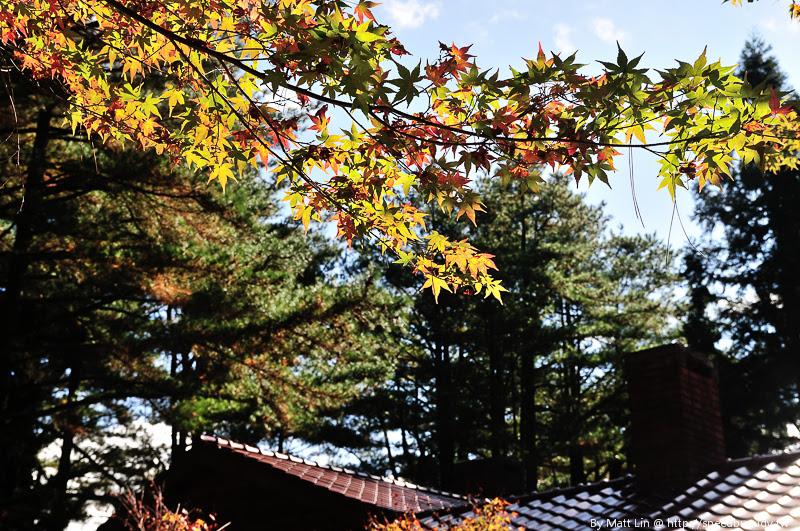 福壽山農場楓紅-40