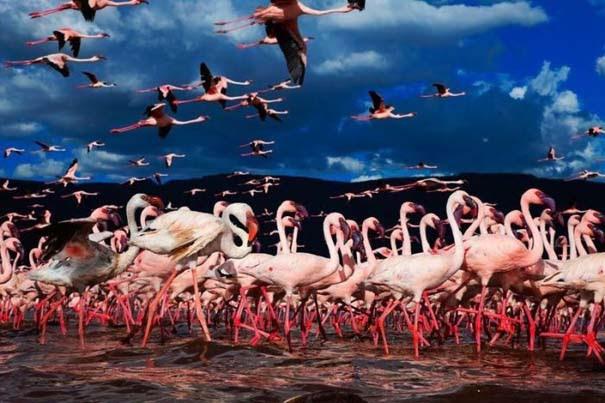 Nakuru: Η λίμνη με τα εκατομμύρια Flamingos (19)