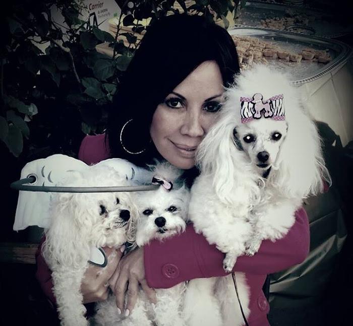 blind-dog-safety-device-muffins-halo-17