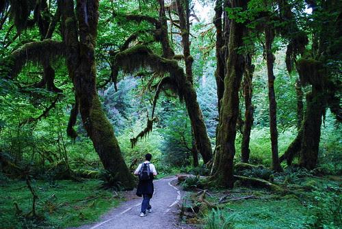 Through the rainforest