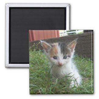 Farm Kitten Fridge Magnet