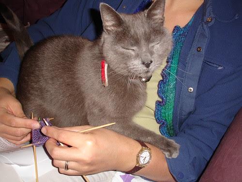 henrycat lends a paw (2)