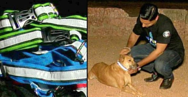 This Mangaluru Man Ties Collars Around Stray Dogs Necks To Save them from Tragic Road accidents