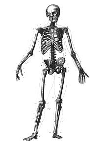 What Makes Our Bones Strong? - Activity - TeachEngineering