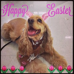 Happy Easter IG'ers!!   #instapets #latergram #dog #puppy #socute #instadog #eastersunday #blessed #TheResurrection #Christian #HeHasRisen
