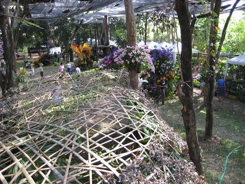 Rose Garden: Orchid  Market under net canopy