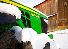 Deere in Snow