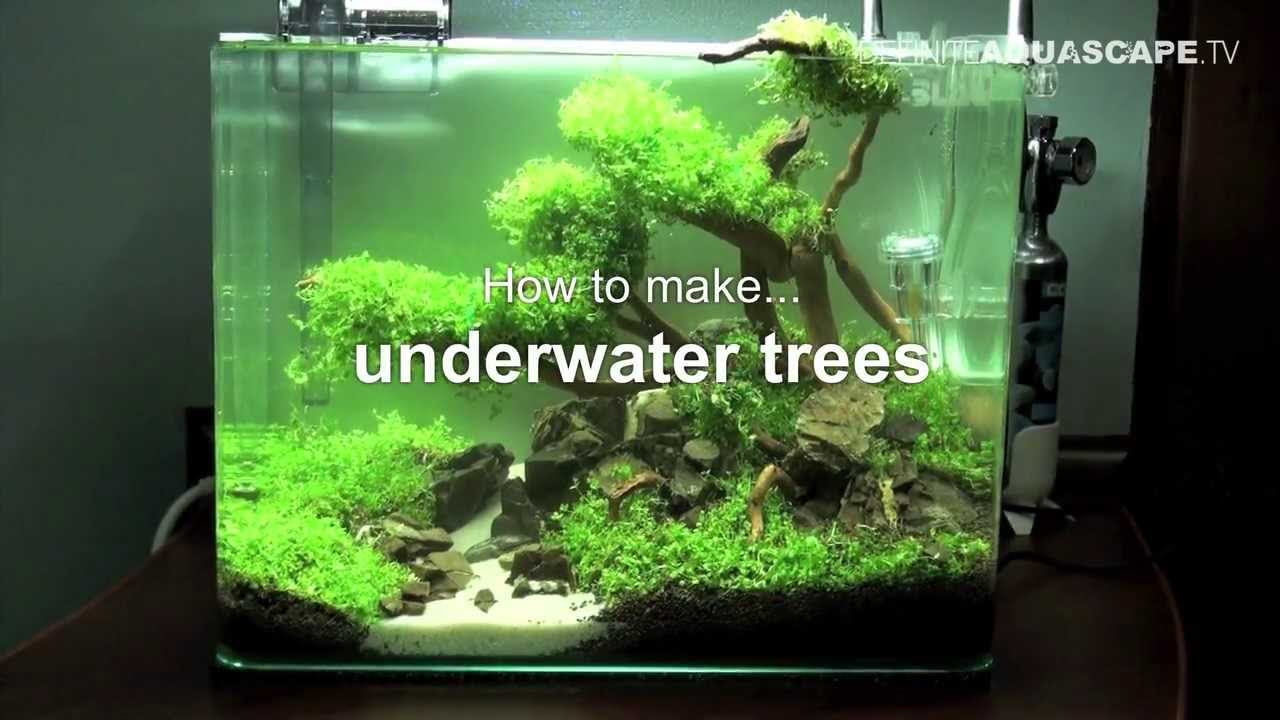 aquascaping how to make trees in planted aquarium
