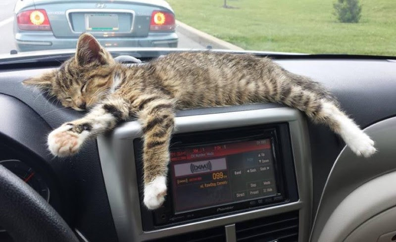 Ветеринар сказал, что котенка следует несколько дней подержать в тепле. животные, коты, котёнок