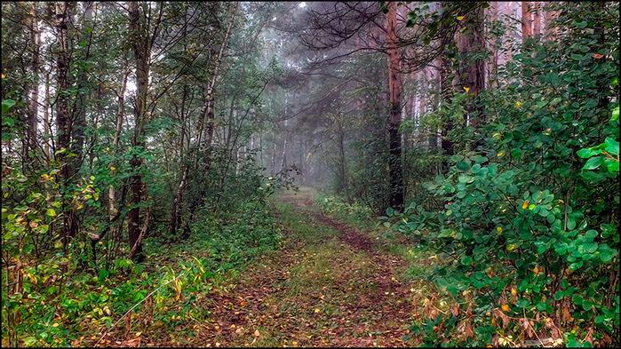 Осенний лес/3673959_10 (700x393, 223Kb)