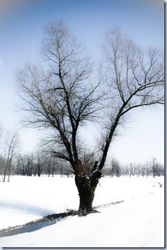 04 drevo