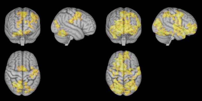 Πως λειτουργεί ο εγκέφαλος κατά τη διάρκεια διαλογισμού, socialpolicy.gr
