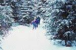 Ski_20de_20fond