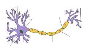 Recreated :File:Neuron-no labels2.png in Inksc...