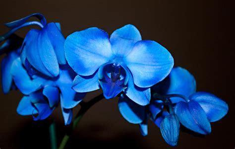 Beautiful Blue Orchid ? WeNeedFun