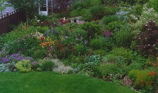 perennial garden in June zone 6   Garden ideas   Pinterest