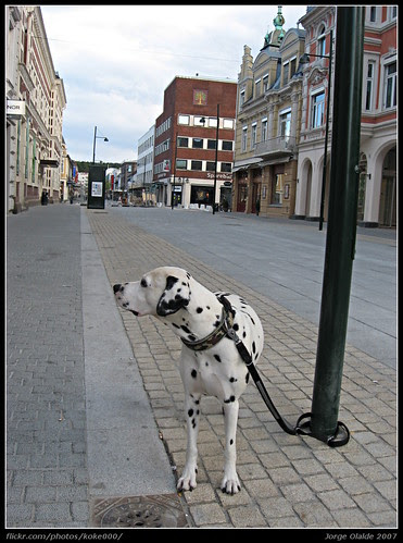 Perro noruego en Kristiansand