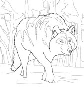 Wolf coloring pages | Free Coloring Pages