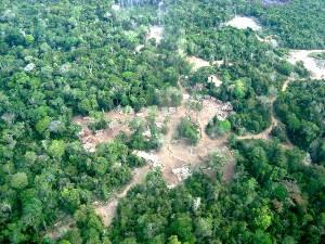 Clareiras provocadas pela extração ilegal de madeiras são foram flagradas pelo Ibama. (Foto: Divulgação/ Ibama)