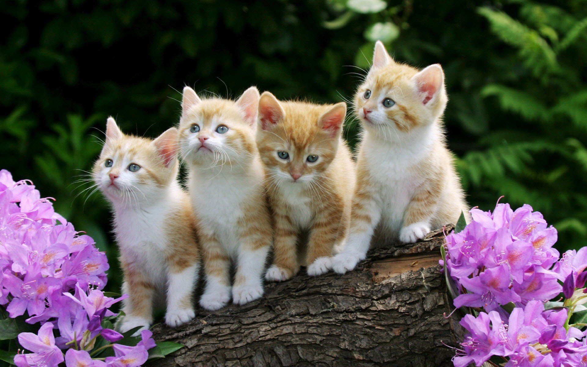 Cute Pictures Of Baby Cats And Dogs Cat S Blog