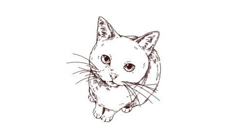 猫 Illust Recipe