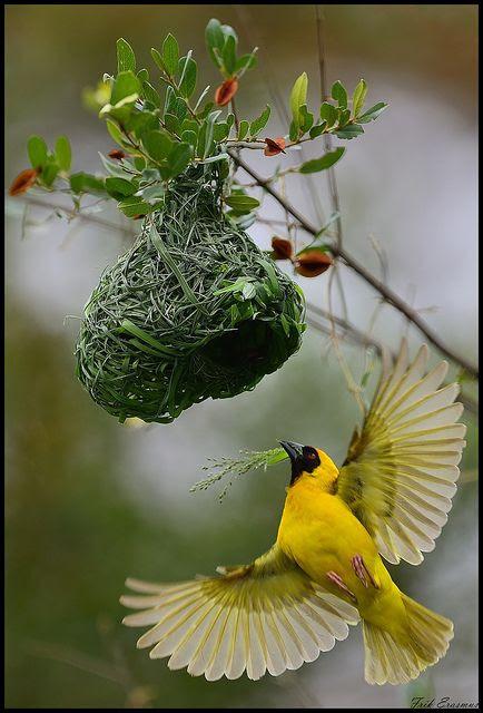 beautiful bird and nest