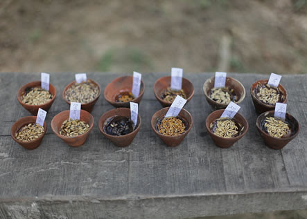 photo of small, labeled bowls of seeds