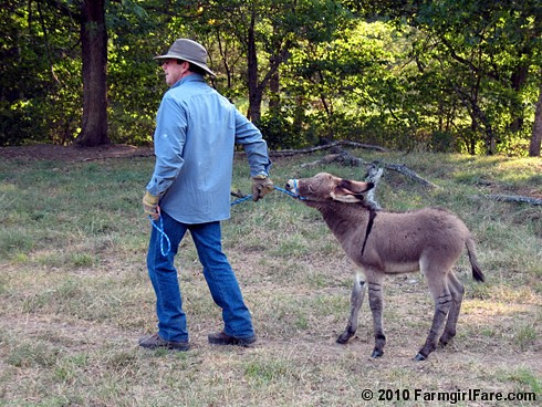 Donkey Training 1