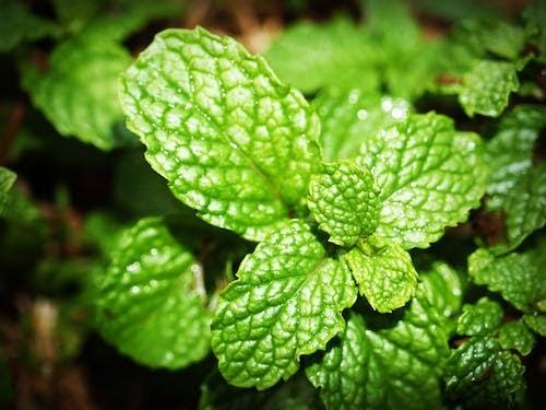 Health Benefits Of Mint :
