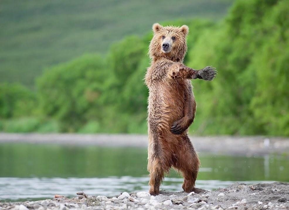 Alayım kızıma bir kutu boya boyasın kendini boydan boya şişe dolu mastika bir elinde cımbız, bir elinde ayna daha onüçünde bakın hele siz şuna düğün müzikleri düğün havası halay kop kop kopmak trans disko dans etmeyi bilmiyorum dans edemiyorum nasıl dans ederim dans kursları salsa latin hovarda malatya bulunmaz eşin ham çökelek kıvırmak dansöz