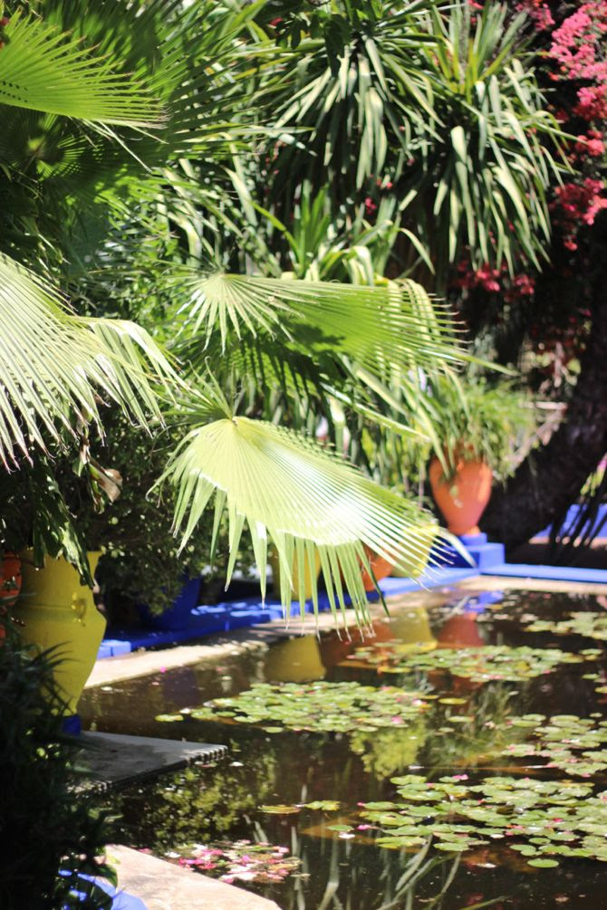 photo 22-jardin majorelle_marrakech-YSL_zpszuy14is8.jpg