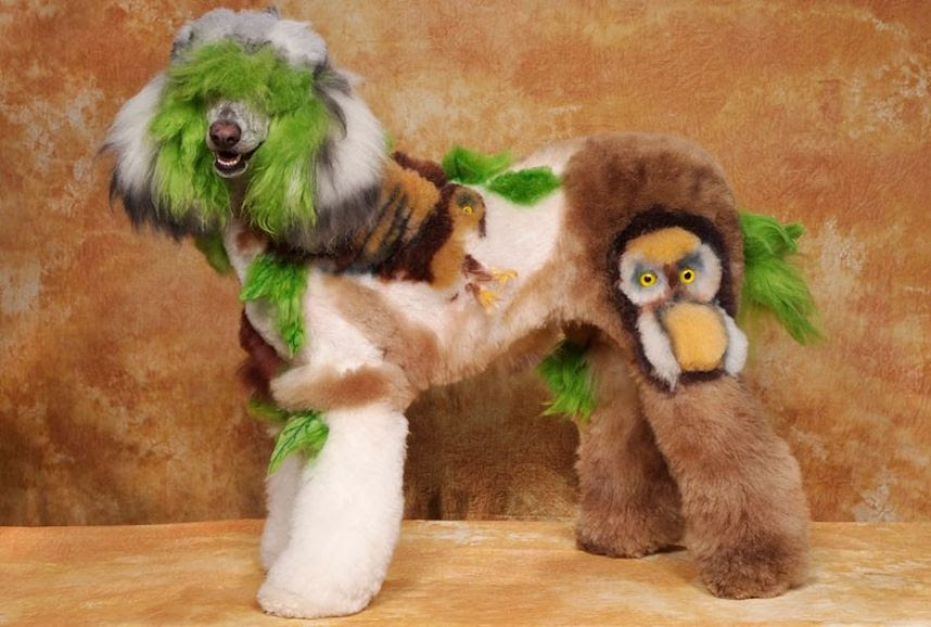 Penteados caninos bizarros 19
