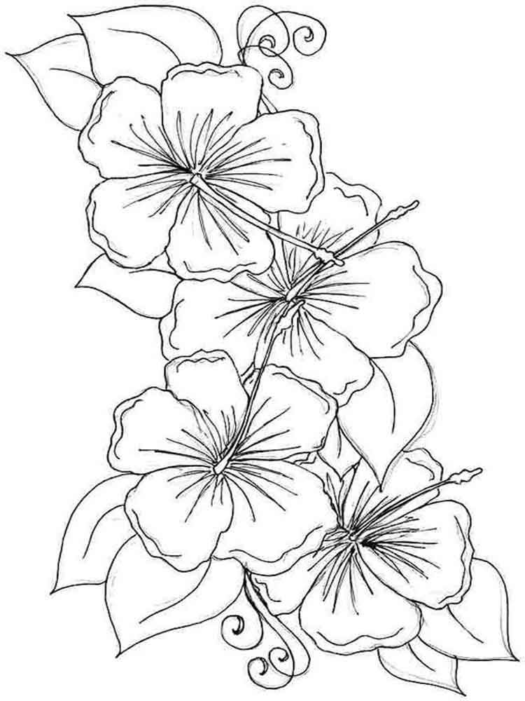 Hibiscus Flower Coloring Page Clip Art Library