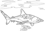 Lemon Shark Jumps Out of the Water coloring page | Free ...